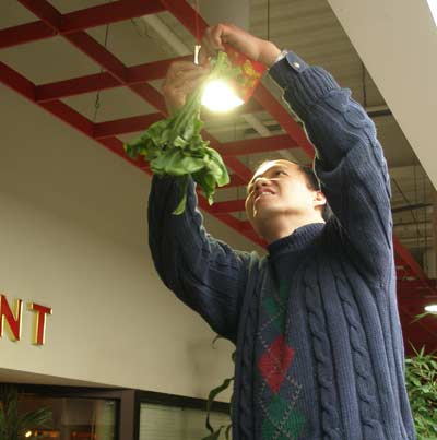 Hanging lucky lettuce for Chinese New Years at Li Wah