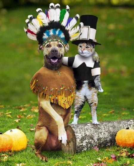 Dog and cat dressed for Thanksgiving