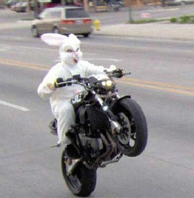 Easter bunny on motorcycle