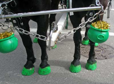 Horse hooves painted green for St Patrick's Day