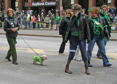 Small dog marching in parade