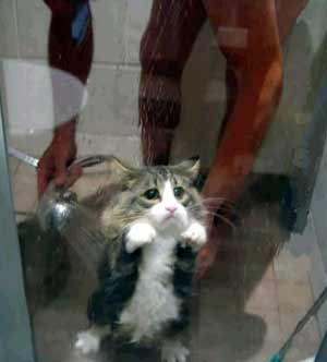 Unhappy cat shower