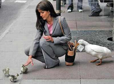 Woman playing with ducks as one takes her money
