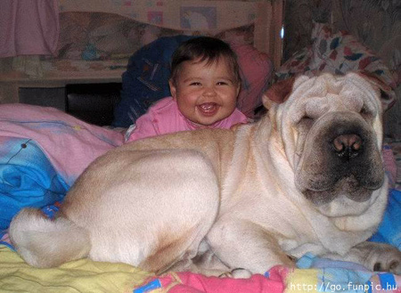 Baby with big dog