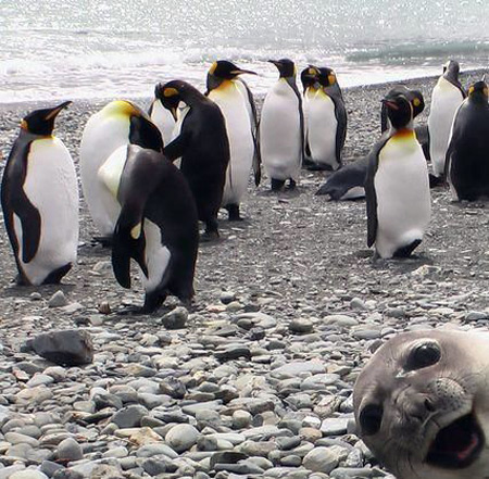 Penguins and seal in funny vacation photo