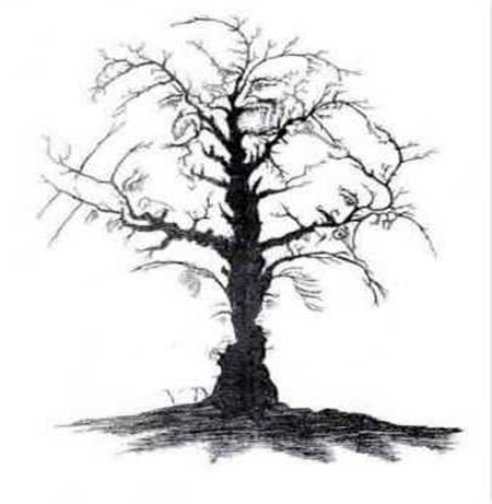 Faces hidden in a tree - illusion