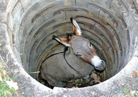 Donkey caught in a well