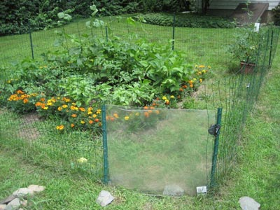 How To Keep Rabbits And Groundhogs Out Of Garden Garden Ftempo