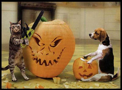 Cat and Dog dressed up for Halloween