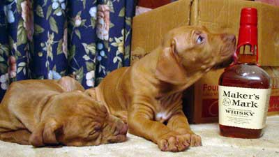 Rhodesian Ridgeback Puppies and Makers Mark Bottle