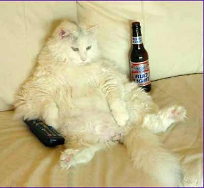 Cat with beer and TV remote