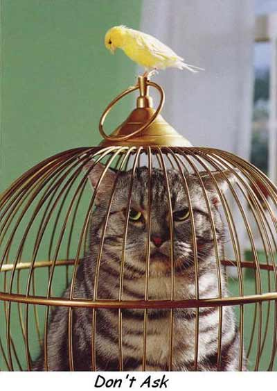 cat in a bird cage with bird on top