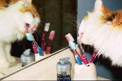 cat licking toothbrush