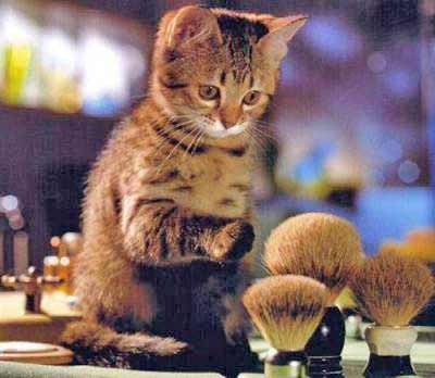cat trying makeup