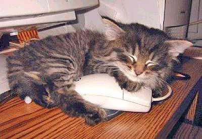 cat with computer mouse