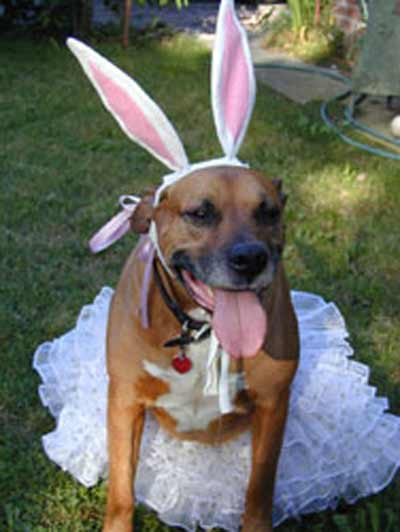 dog with bunny ears