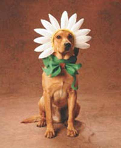 dog with flower hat
