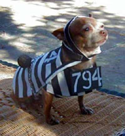 dog in prison clothes