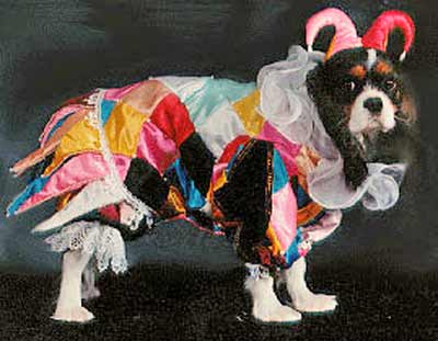 dog dressed as court jester clown