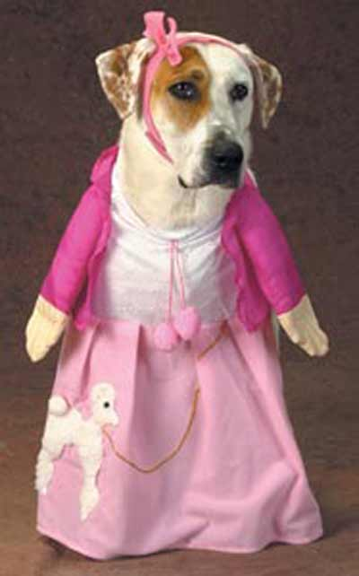 dog dressed in poodle skirt