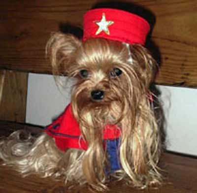 dog in red star