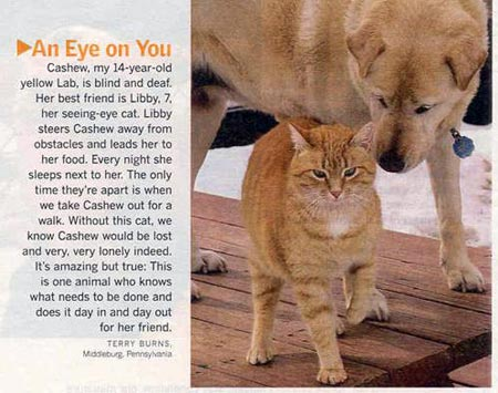 Blind dog with seeing-eye cat