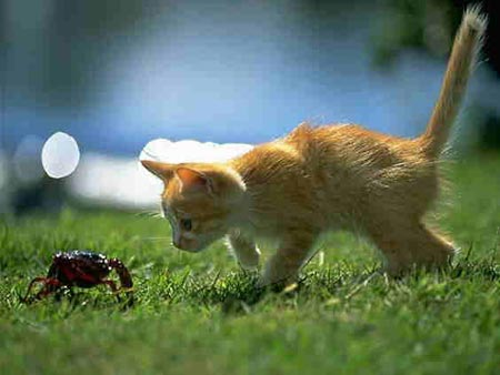 kitten and crab