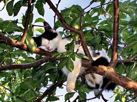 Cat sleeping in tree