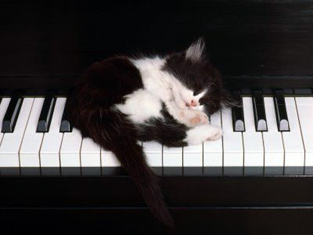 Cat sleeping on piano