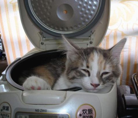 Cat sleeping in radio