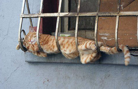 Cat sleeping in strange place