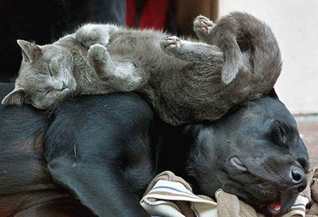 Cat sleeping on sleeping dog