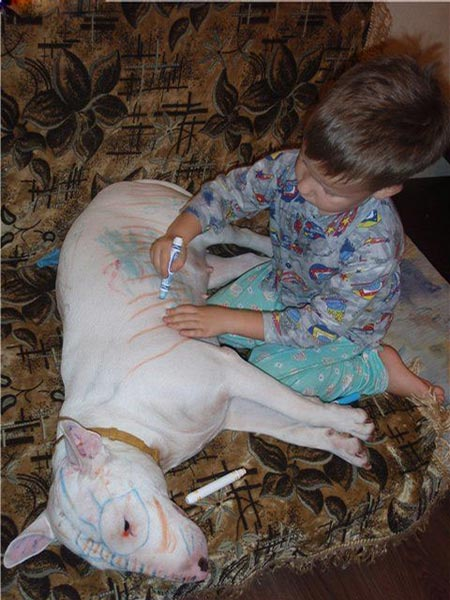 Kid drawing on pit bull dog