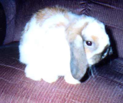 Princess the Cleveland pet bunny rabbit