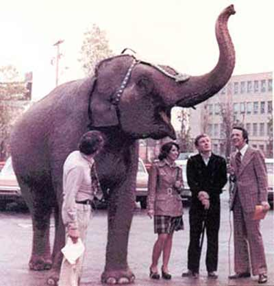 Morning Exchange's Fred Griffith, Joel Rose and Liz Richards with an elephant and trainer from the Ringling Brothers Barnum & Bailey circus in the early 1970's
